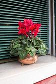 Idyllic window with flower — ストック写真