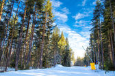 Green pine trees and the ski path on blue cloudy sky background — Stock Photo