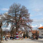 Many Bulgarian traditional custom spring sign Martenitsa on the tree in the center of Bansko, Bulgaria  — Stock Photo