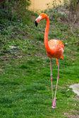 American or Caribbean Flamingo portrait — Stock Photo