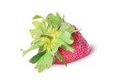 Single freshly strawberries backwards — Stock Photo