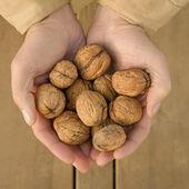 Walnuts in  a hand — Foto Stock