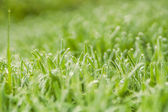 Summer natural green background — Stock Photo