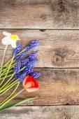 Spring flowers — Stockfoto