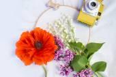 花朵 春天 — 图库照片