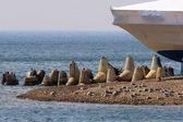 Cape marine — Stock Photo