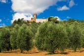 View of Magona castle from an olive grove, Grosseto Italy — Stock Photo