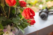Red rose as a natural and blur camera travel  background — Stock Photo