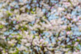 Background of Bokeh under green tree with white and purple flowe — Stock Photo