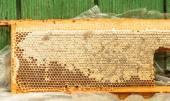 Fresh honey in honeycomb — Stock Photo