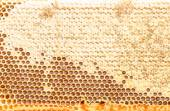 Fresh honeycomb textured background — Stockfoto