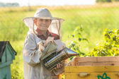 Young beekeeper working in apiary — Foto de Stock