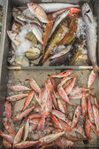 Fresh fish on Greek island Kalymnos local market — Stock Photo