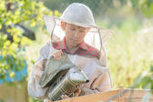 Teenage beekeeper inspecting commercial bee yard — Zdjęcie stockowe