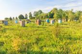 Rural farm apiary with multicolor beehouses — Photo