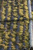 Starý azbestový cement listy pokryté zeleným mechem — Stock fotografie