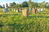 Farm apiary with multicolor beehouses — Photo