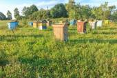 Farm apiary with multicolor beehouses — Stock Photo