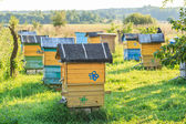 Summer apiary with several hives — Stockfoto