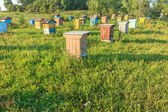 Summer bee-garden with several hives — Stockfoto