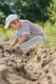 Teenage farmer at root vegetables harvesting — Stock Photo