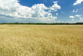 Cumulus clouds on rich blue sky high up over field — Stock Photo