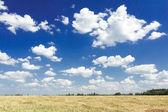 Cumulus on aero blue sky above harvested grain goldenrod color field — Stock Photo