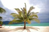 Palm tree on the beach — Stock Photo