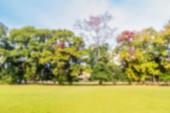 Floresta e Prado de fundo abstrato Blur. — Fotografia Stock