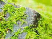 Musgo sobre una piedra — Foto de Stock