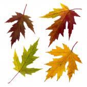 Conjunto isolado de folhas de outono — Fotografia Stock