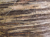 Birch bark natural background — Stock Photo