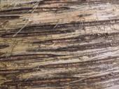 Birch bark natural background — Stock Photo