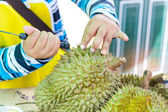 Hands of woman removing durian peel — Stock Photo