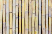 Close-up of bamboo fence — Stock Photo