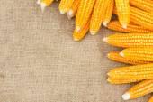 Ears of ripe corn on the gunnysack — Photo