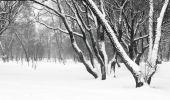 Landscape. Snowfall in a garden. — Stock Photo