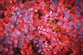 Autumn foliage background — Stock Photo