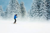 Skiing in a mountain forest — Stock Photo