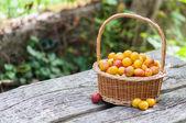 Mirabelles plums — Stock Photo