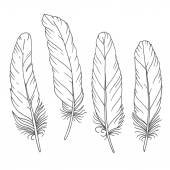 Hand drawn feathers set on white background — Stock Vector