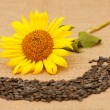 Ripe sunflower head on a table next to the seeds and flower seeds. — Stock Photo #56574747
