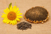 Autumn harvest. Flower seeds, ripe grain sunflower, sunflower seeds. — Fotografia Stock
