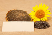 Composition of different types of crop seeds. Autumn harvest. Flower seeds — Stock Photo