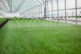 Greenhouse watering system in action — Stock Photo