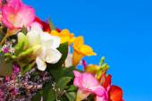 A bouquet of flowers from fresia on the background of blue sky — Stock Photo
