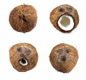 Collection of  Coconuts set isolated on white background — Foto de Stock