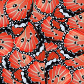 Exotic red butterfly wing — Stock Photo