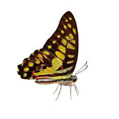 Exotic color butterfly on white background — Stock Photo