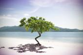 Vintage Trees on the beach — Photo